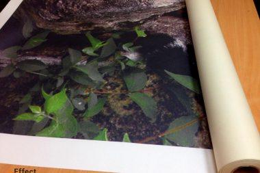 печать фотообоев под заказ днепропетровск